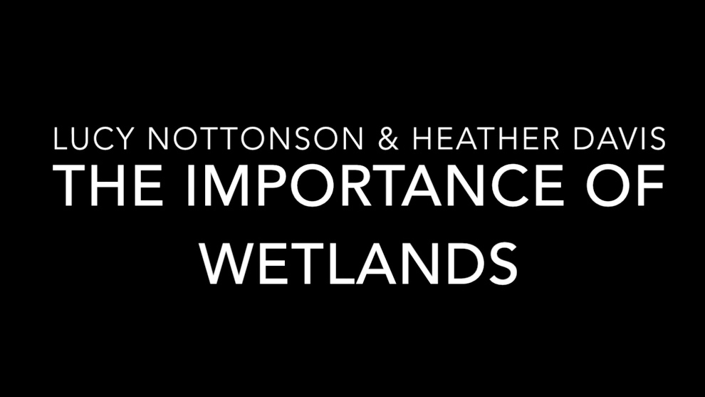 The Importance of Wetlands - Video